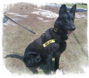 Springdale Town Council meeting, gets new crime fighting  dog, named Batman