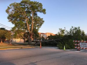 Lexington County crawls out after storm to see damage – photos