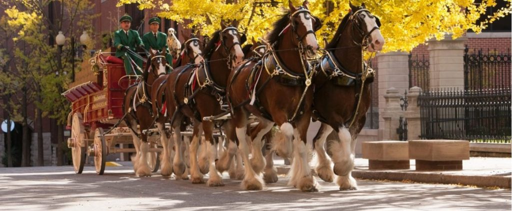Budweiser Clydesdales to be in Lexington on March 18